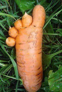 carotte-pied
